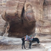 donkeys-of-petra-2